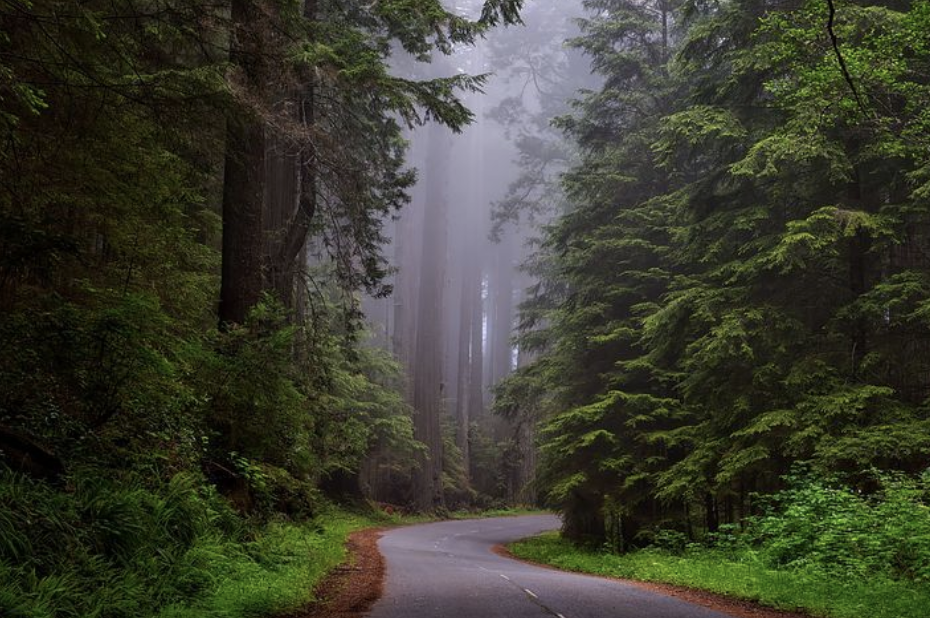 Our Favorite Spring Road Trips in Northern California